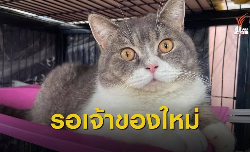 ตร.ชี้เครือข่ายยาเสพติดซื้อแมวฟอกเงิน จ่อขายทอดตลาดใน 7 วัน