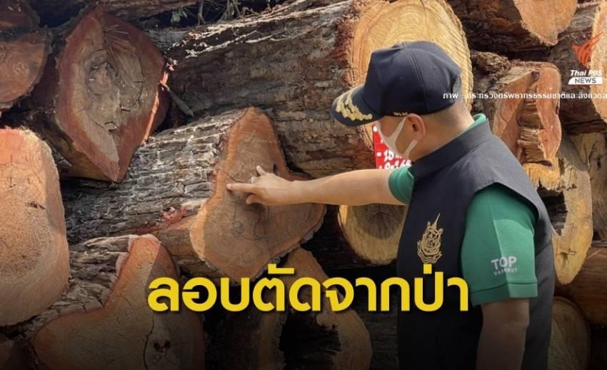 """""""วราวุธ"""" ตรวจยึดไม้ของกลางลอบตัดจากป่าไทรโยค 400 ท่อน"""