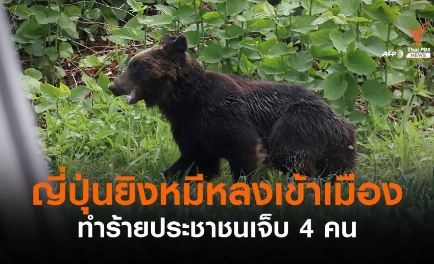 """ญี่ปุ่นยิง """"หมีสีน้ำตาล"""" หลงเข้าเมือง ทำร้ายประชาชนบาดเจ็บ 4 คน"""