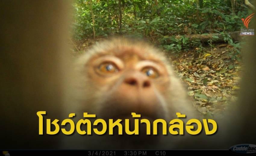 โชว์ตัวหน้ากล้องดักถ่าย เขตรักษาพันธุ์สัตว์ป่าภูสีฐาน