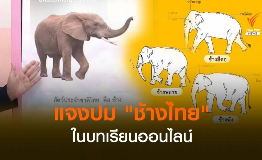 """แจงปม """"ช้างไทย"""" ในบทเรียนออนไลน์อนุบาล"""