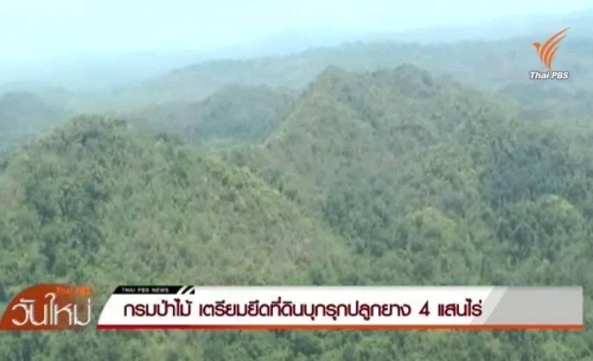 กรมป่าไม้เตรียมยึดที่ดินบุกรุกปลูกยางพารา 400,000 ไร่