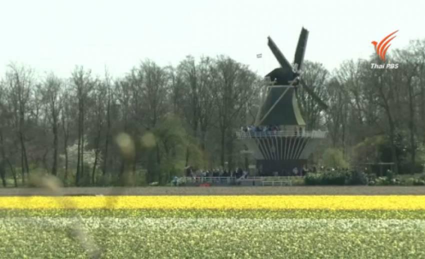 ฤดูดอกไม้ผลิบานในเนเธอร์แลนด์