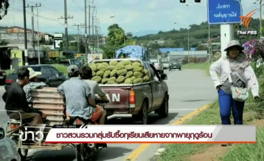 ชาวสวน จ.จันทบุรี รวมกลุ่มรับซื้อทุเรียนเสียหายจากพายุฤดูร้อน