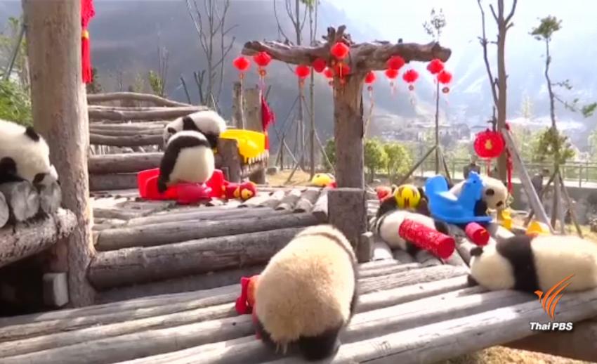 ลูกแพนด้าฉลองวันตรุษจีน