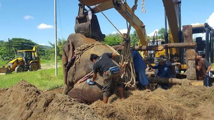 ภาพเฟซบุ๊ก ศูนย์อนุรักษ์ช้างไทย