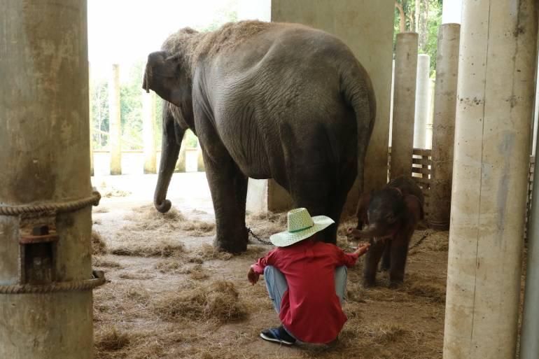 ภาพ:องค์การสวนสัตว์