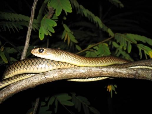 ภาพ : siamensis.org