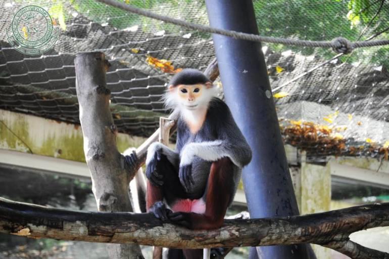 ค่างห้าสี สวนสัตว์เขาเขียว จ.ชลบุรี