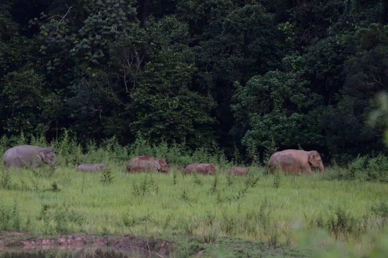ภาพ:กรมอุทยานแห่งชาติสัตว์ป่าและพันธ์ุพืช