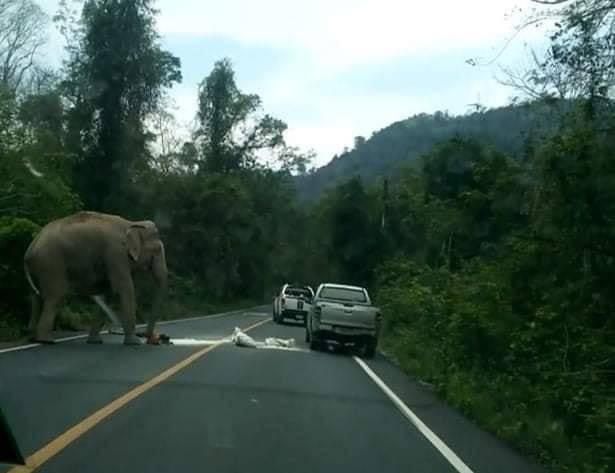 ภาพ:เขตรักษาพันธุ์สัตว์ป่าเขาอางฤาไน