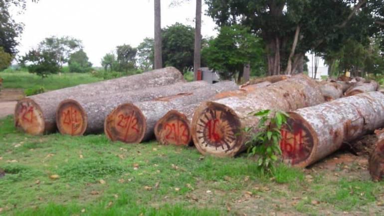 ภาพ:กรมป่าไม้