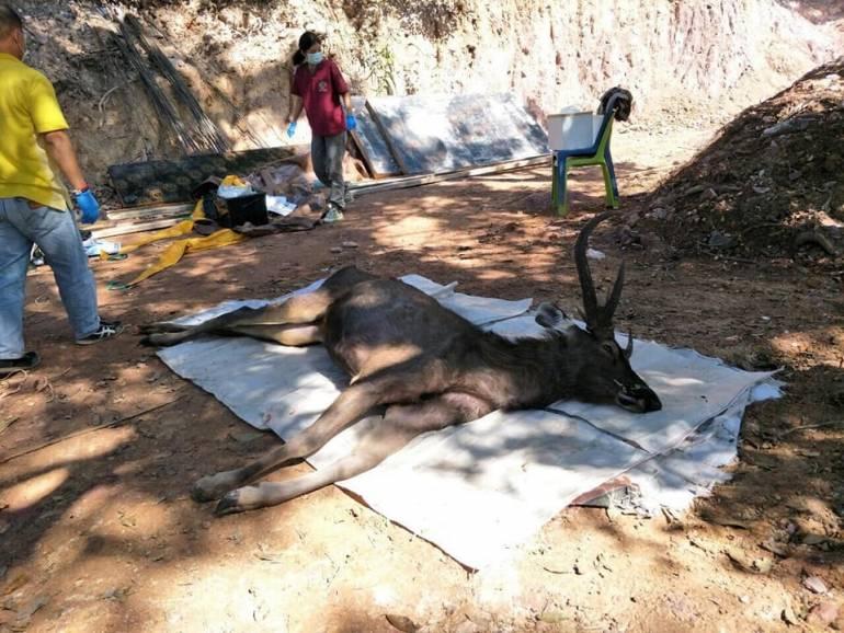 ภาพ:สำนักอนุรักษ์สัตวป๋า สำนักบริหารพื้นที่อนุรักษ์ที่ 13-แพร่