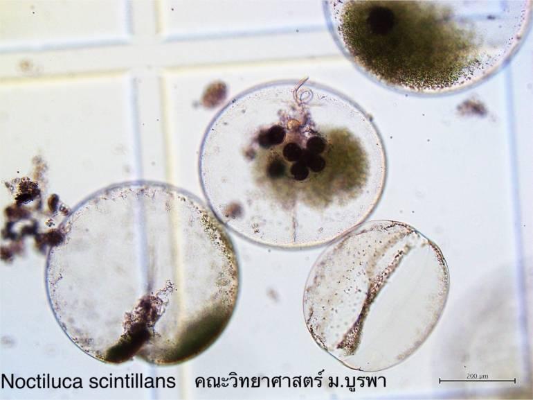 ภาพ:คณะวิทยาศาสตร์ ม.บูรพา