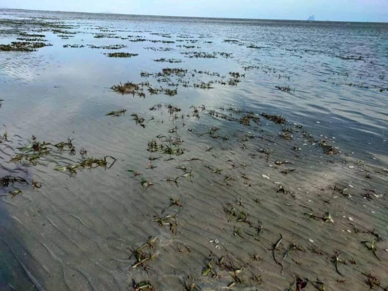 , กังขา! ขุดลอกร่องน้ำอ่าวกันตังกระทบหญ้าทะเลตาย 1,000 ไร่