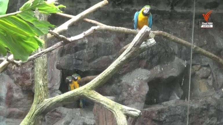 , อดีต พนง.สวนสัตว์สงขลา แฉขบวนการค้าสัตว์ป่าในสวนสัตว์