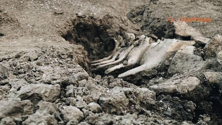 , ตะลึง! พบกระดูกวาฬโบราณที่บ้านแพ้ว คาดจุดพบเป็นทะเลมาก่อน