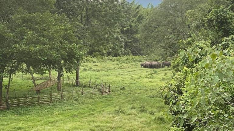 ภาพ : กรมอุทยานแห่งชาติ สัตว์ป่าและพันธุ์พืช