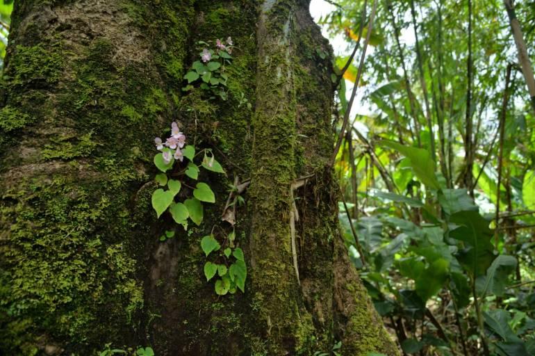 ภาพ : กรมอุทยานแห่งชาติสัตว์ป่าและพันธุ์พืช