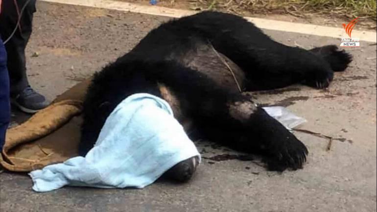, ล้อมจับหมีตาฟาง พลัดหลงจากป่าเข้ามาในชุมชน หวั่นถูกทำร้าย