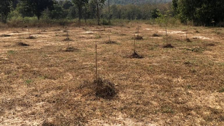 """, กรมป่าไม้ ยันต้นไม้ """"ประวิตร-ฌอน"""" ปลูกป่าแม่ริมรอด 90%"""