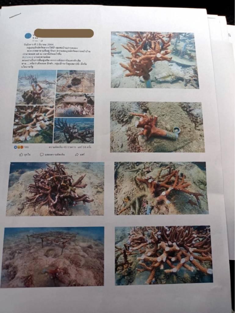 """, เร่งตามตัว มือหักยอดปะการังในแปลงฟื้นฟู """"เกาะทะลุ"""""""