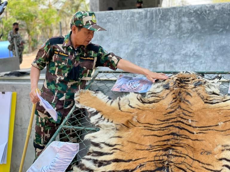 """, แจ้งข้อหาเพิ่ม สวนสัตว์ดัง """"3 เสือโคร่ง"""" DNA ไม่ตรงปก"""