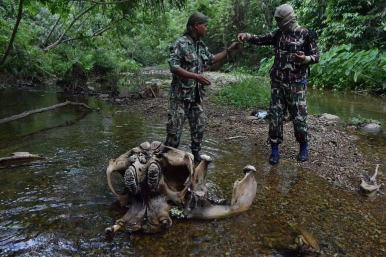 ภาพ: กรมอุทยานแห่งชาติสัตว์ป่าและพันธุ์พืช