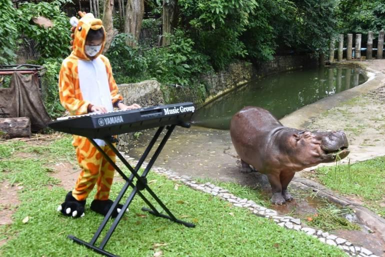 , นักท่องเที่ยวไม่มี-รายได้ตก สวนสัตว์แจงปมขอบริจาคซื้ออาหารสัตว์