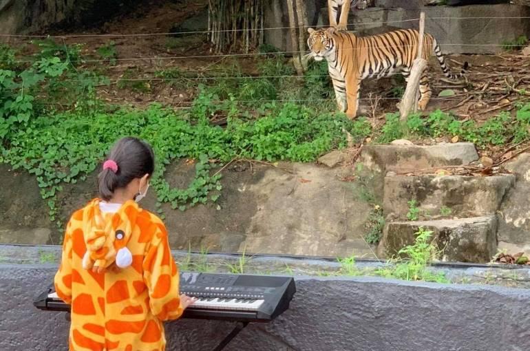 """, """"เขาเขียว"""" คลายเหงา จัดศิลปินอาสาเล่นดนตรีให้สัตว์ฟัง"""