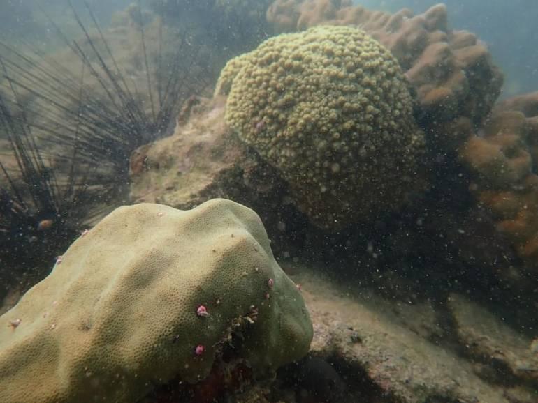 """, จับตา! อุณหภูมิน้ำทะเลภาคตะวันออกอุ่น ห่วง """"ปะการังฟอกขาว"""""""