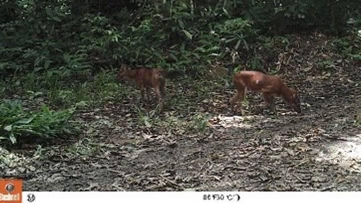 ภาพ : สำนักอนุรักษ์สัตว์ป่า กรมอุทยานแห่งชาติ สัตว์ป่า และพันธุพืช