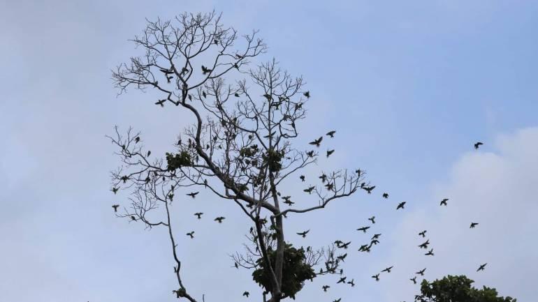 """, """"นกแก้วโม่ง"""" กับความหวังอนุรักษ์อัตลักษณ์ จ.นนทบุรี"""