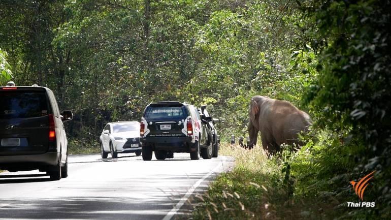 """, แจงปม """"ช้างไทย"""" ในบทเรียนออนไลน์อนุบาล"""