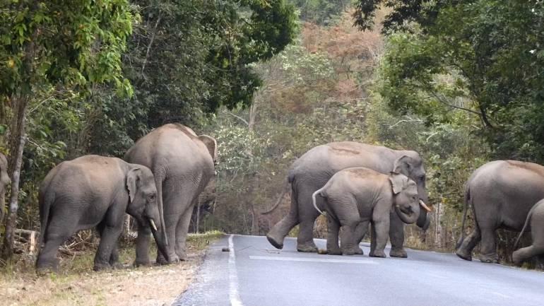 """, คุยกับ """"สุทธิพร"""" เจ้าของฉายาชายผู้สื่อสารกับช้างเขาใหญ่"""
