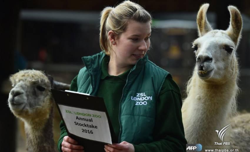 จนท.สวนสัตว์ ZSLในกรุงลอนดอน เริ่มนับจำนวนสัตว์ประจำปี