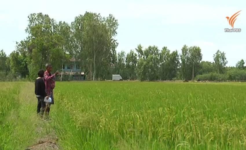 ภัยแล้งบีบเกษตรกรจำใจขายนาปลดหนี้ พลิกชีวิตหันไปเช่าที่ดินนายทุนทำแทน