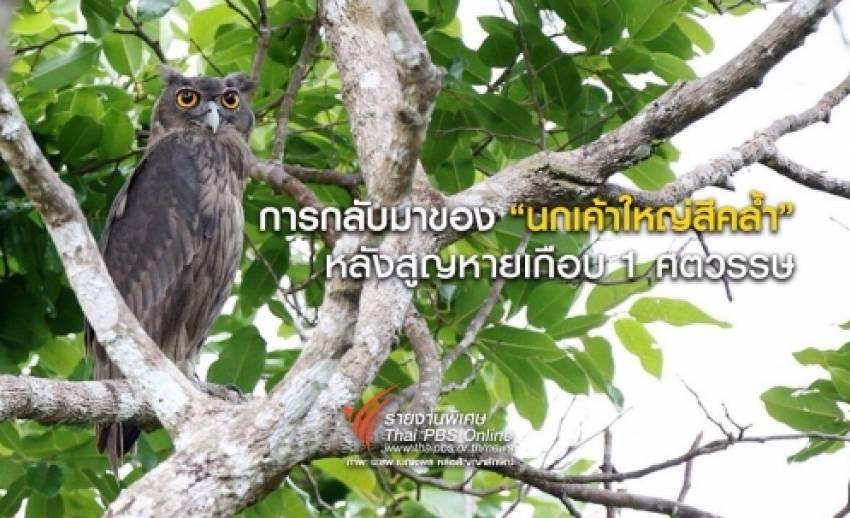 """การกลับมาของ """"นกเค้าใหญ่สีคล้ำ"""" ในรอบเกือบ 1 ศตวรรษ"""