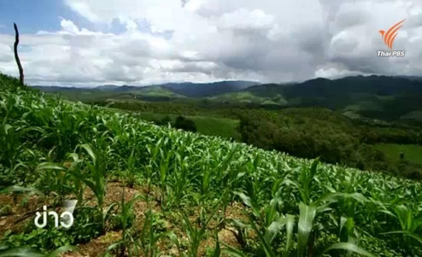 เสนอรัฐหนุนแหล่งเงินกู้แก้ทำเกษตรเชิงเดี่ยวอ.แม่แจ่ม จ.เชียงใหม่