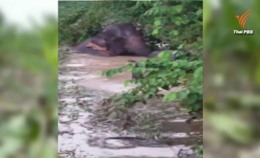 ช้างป่าเข้ากินผลไม้ ทำลายสวนใน จ.จันทบุรี
