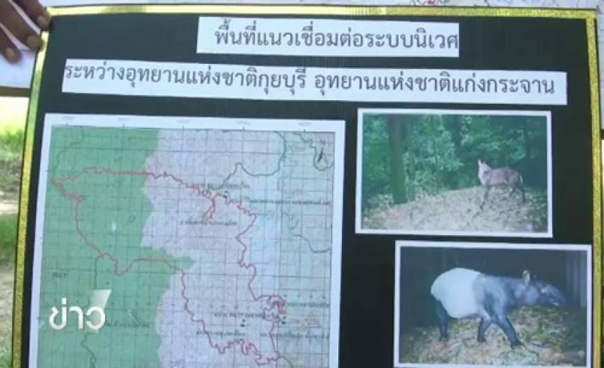 พบแหล่งวางไข่จระเข้น้ำจืดพันธุ์ไทยที่อุทยานฯ กุยบุรี