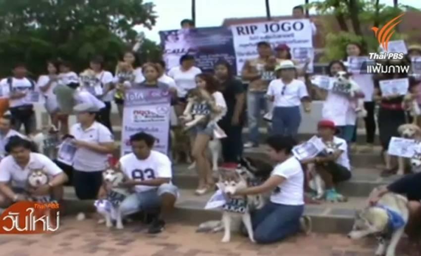 """กลุ่มคนเลี้ยงสุนัขไซบีเรียน ฮัสกี้ ทวงถามความคืบหน้าคดีทำร้าย""""โจโก้"""""""