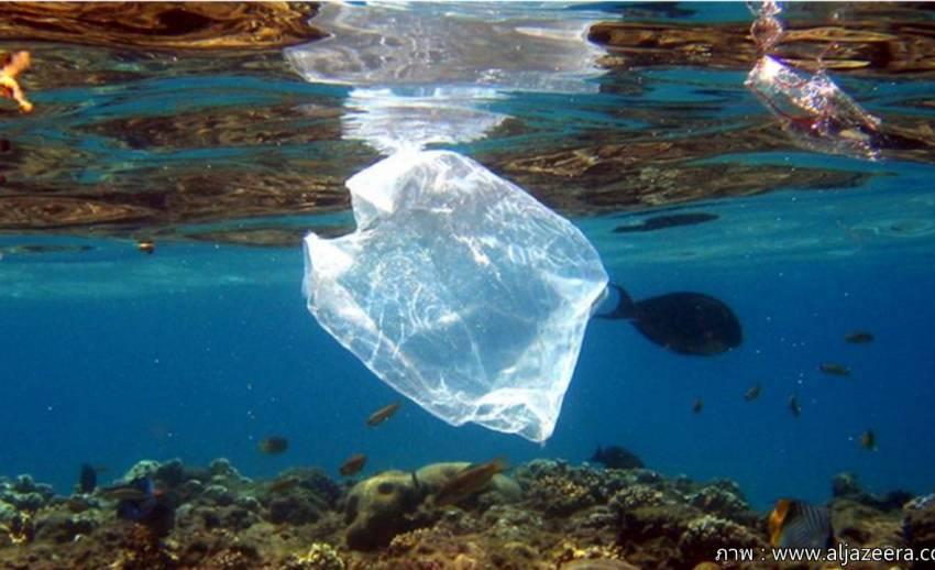งานวิจัยเผยปี 2050 ปริมาณขยะพลาสติกมากกว่าจำนวนปลาในมหาสมุทรทั่วโลก