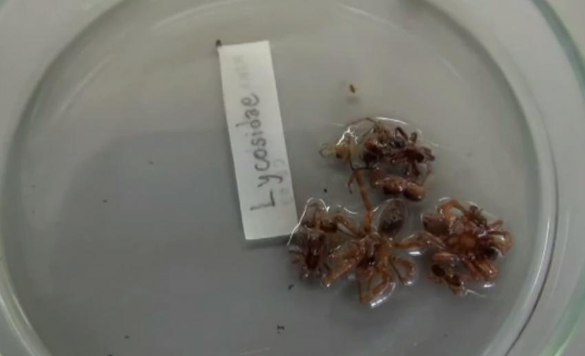 ม.มหิดล เผยสำรวจไม่พบแมงมุมพิษในถ้ำหลายแห่ง จ.กาญจนบุรี-แนะหลีกเลี่ยงเข้าใกล้หรือสัมผัส