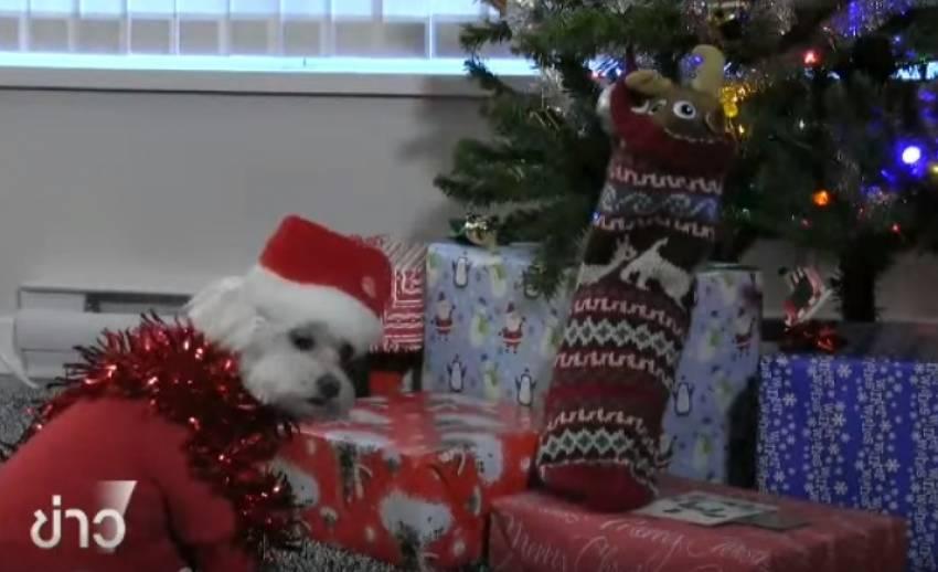 สินค้าสำหรับสุนัขขายดีในช่วงเทศกาลปีใหม่