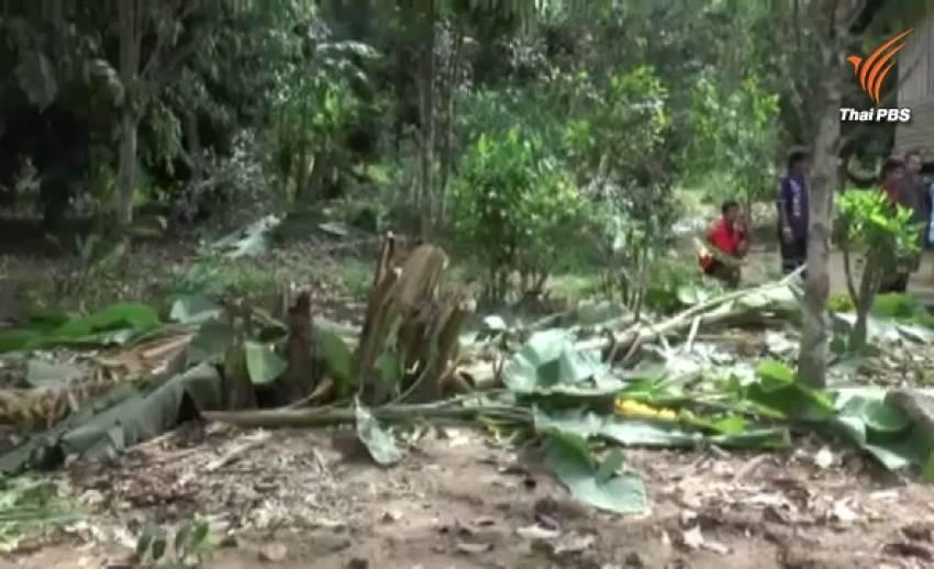ช้างป่าลงจากเทือกเขาบุกสวนกล้วยหอมทอง ชาวบ้านวอนจนท.ช่วยไล่เข้าป่าหวั่นถูกทำร้าย