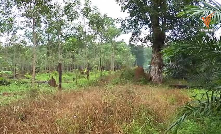 นายกฯ เสนอแนวทางแก้ปัญหาทวงคืนผืนป่าจากชาวบ้าน กลุ่มพีมูฟแนะยกระดับโฉนดชุมชน