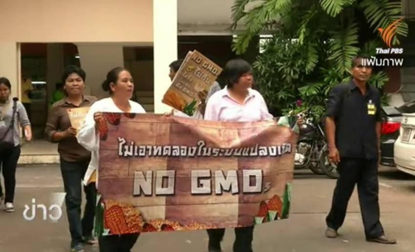 กระแสสนุบสนุน-คัดค้านการทดลองปลูกพืชจีเอ็มโอในไทย