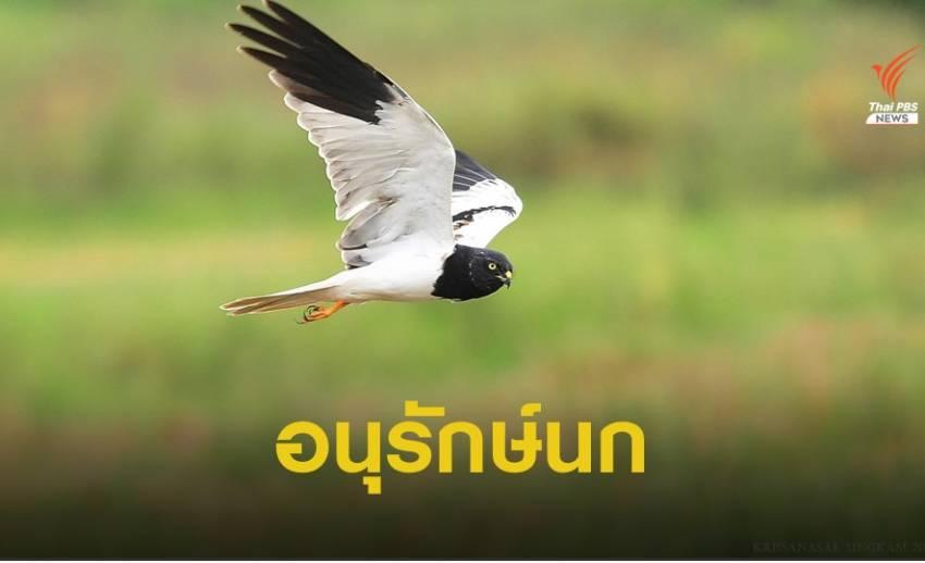 ทำไมต้องอนุรักษ์นกในธรรมชาติ?