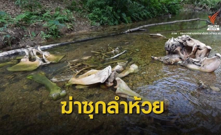 เร่งตามจับ! มือฆ่าช้างทิ้งลำห้วยกลางป่าแก่งกระจาน
